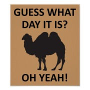 hump_day_camel_funny_wednesday_poster_sign-rc73c310557a7412e9228e99470fa1250_i2mow_8byvr_512